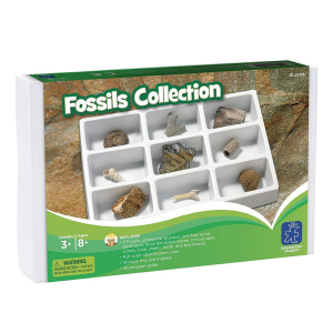 Kit paleontologie - Fosile1