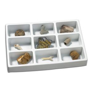 Kit paleontologie - Fosile0