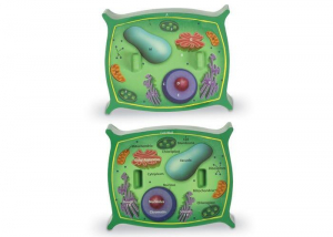 Sectiunea celulei plantei1