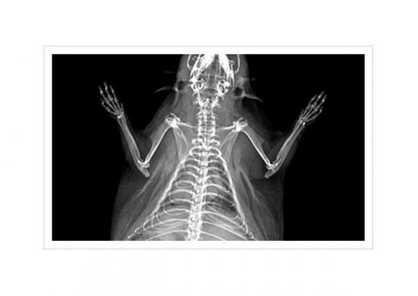 Osteodensitometru iNSiGHT 2