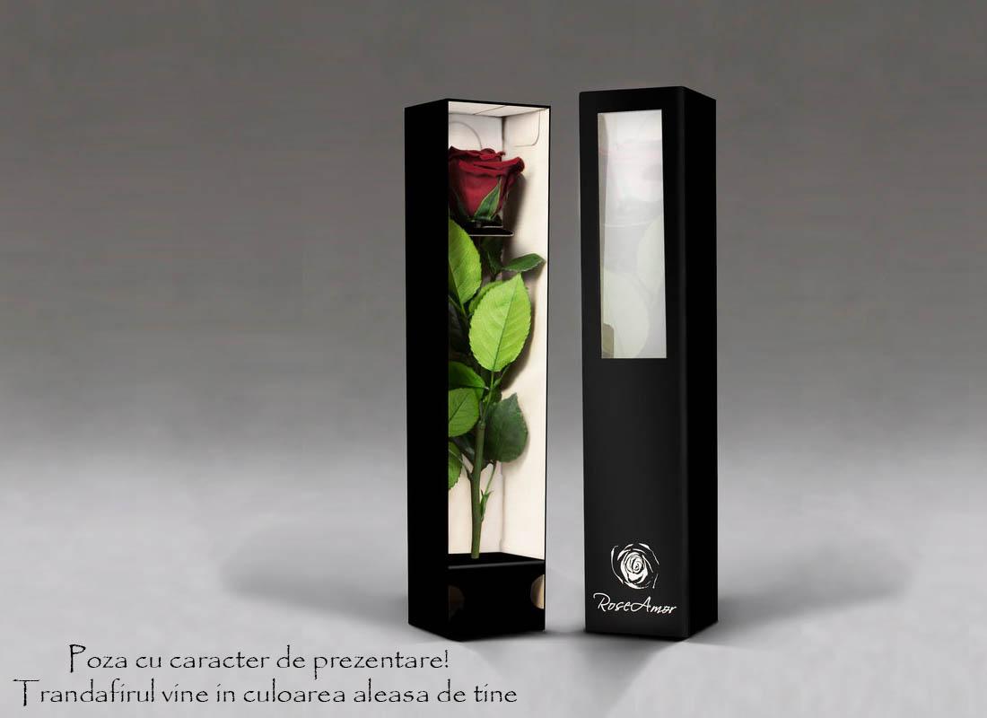 fir-de-trandafir-criogenat-multicolor-2829-1935