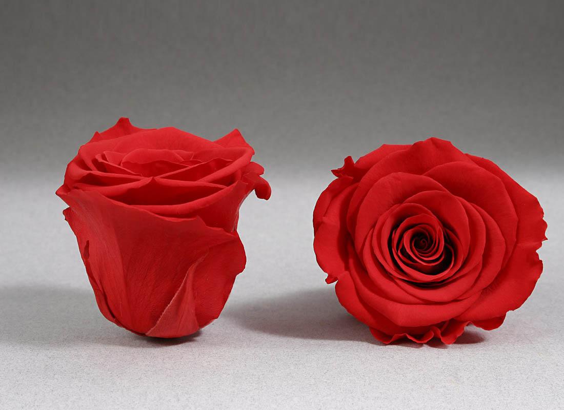 trandafir-criogenat-rosu-giftbox
