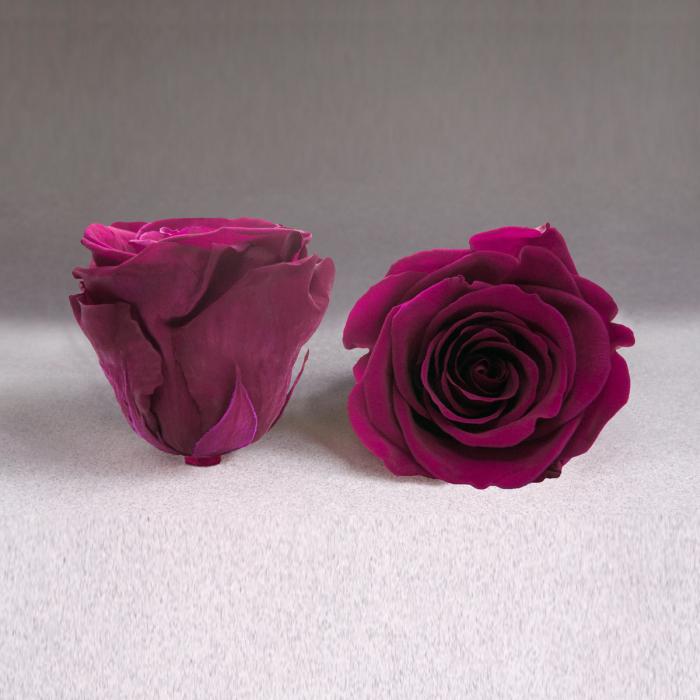 Fir de trandafir criogenat ciclam 0