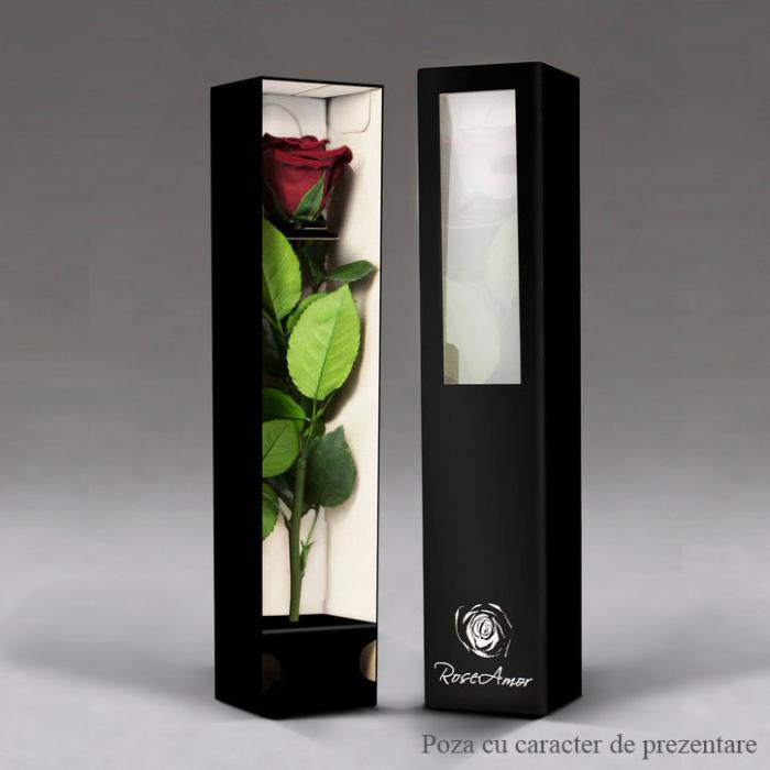 Fir de trandafir criogenat ciclam 1