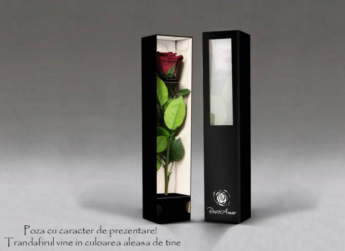 Fir de trandafir criogenat rosu Velvet 1
