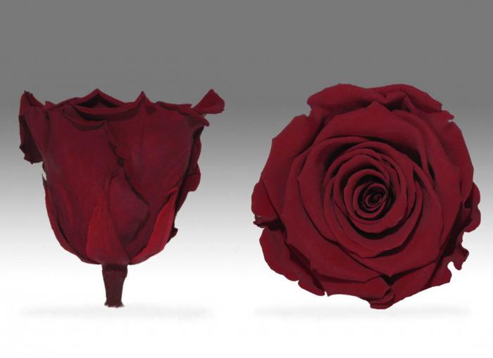 Fir de trandafir criogenat rosu Velvet 0