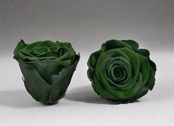 Fir de trandafir criogenat Verde 0