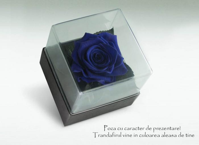 Trandafir criogenat albastru electric Giftbox 2