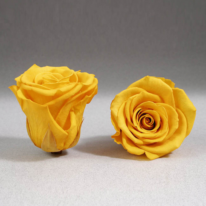 Trandafir criogenat galben Giftbox 0