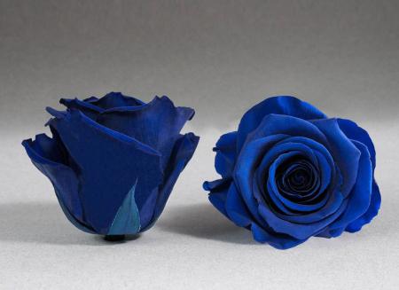 Fir de trandafir criogenat albastru electric0