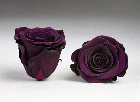 Fir de trandafir criogenat Indigo0