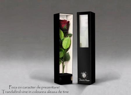 Fir de trandafir criogenat rosu Velvet1