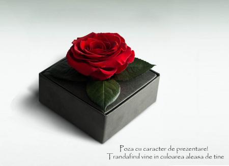 Trandafir criogenat albastru electric Giftbox1