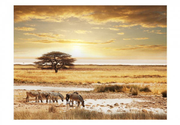 Fototapet - African zebras around watering hole 3