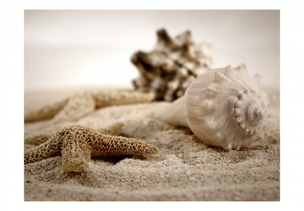 Fototapet - Beach and shell 3