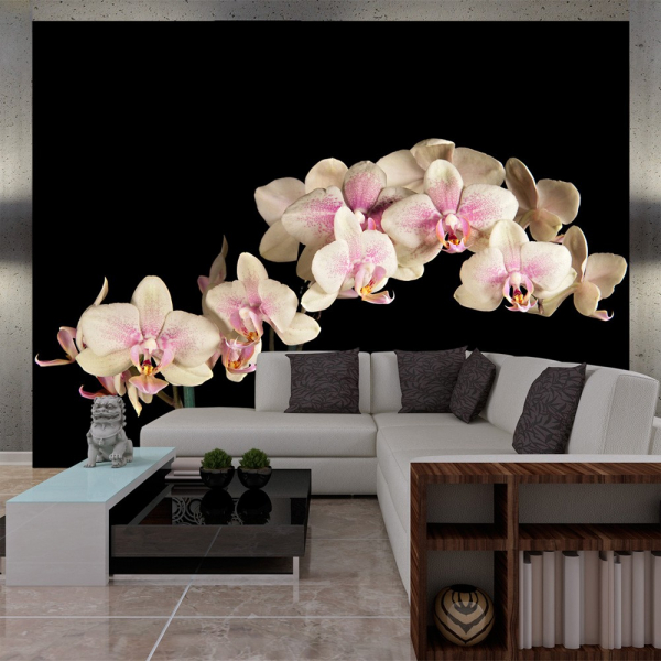 Fototapet - Blooming orchid 0