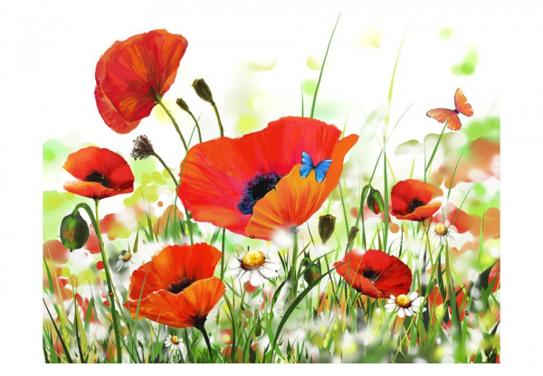 Fototapet - Country poppies 3