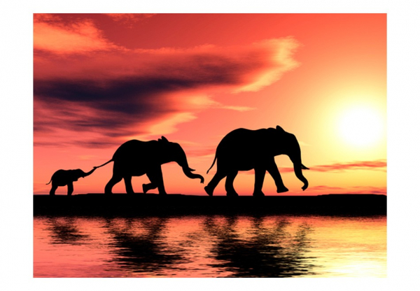Fototapet - elephants: family 3
