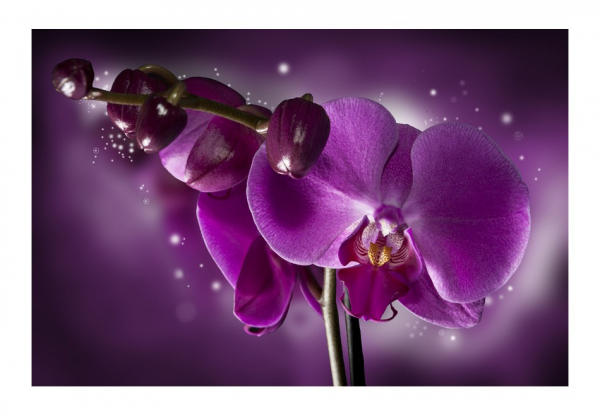 Fototapet - Fairy tale and orchid 3