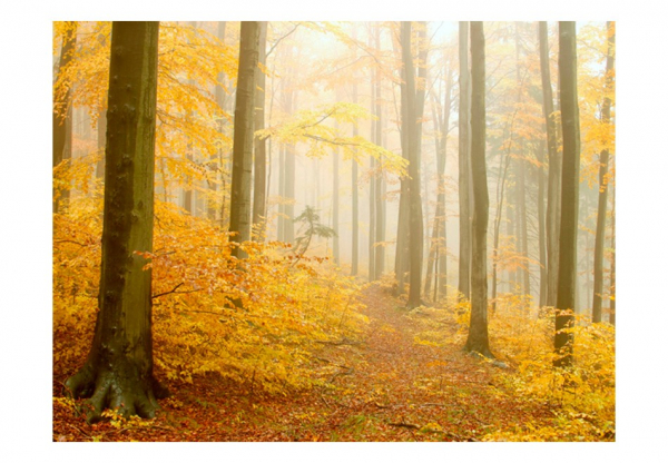 Fototapet - forest - autumn 3