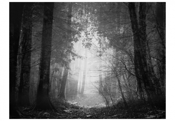 Fototapet - Forest of shadows 3