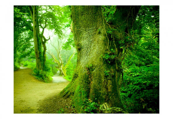 Fototapet - Forest pathway [3]