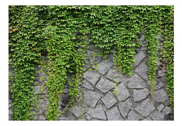 Fototapet - Green wall 6