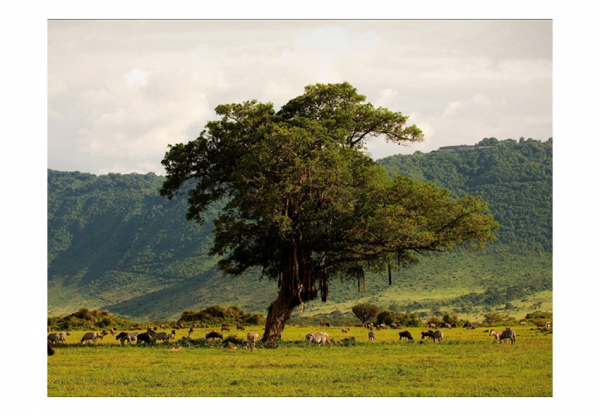 Fototapet - In a crater of Ngoro ngoro 3
