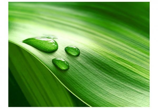 Fototapet - Leaf and three drops of water 3