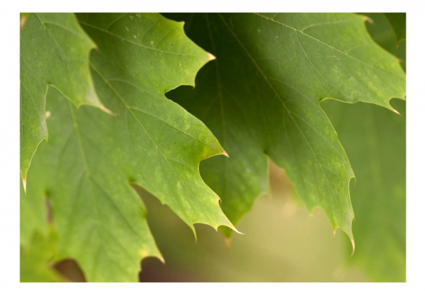 Fototapet - Leaves 3