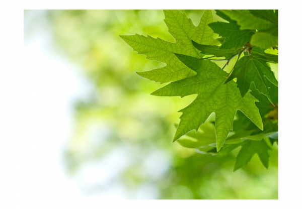 Fototapet - leaves (Shallow focus) 3