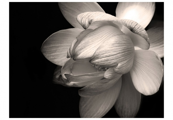 Fototapet - Lotus flower 3