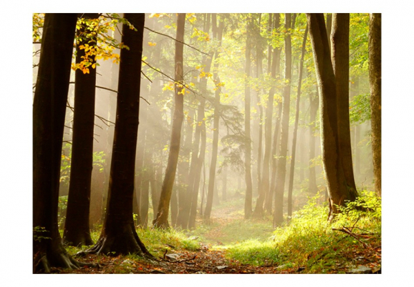 Fototapet - Mysterious forest path 3