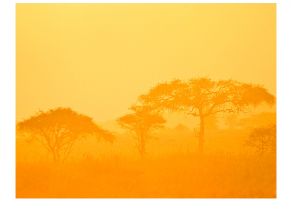 Fototapet - Orange savanna 3