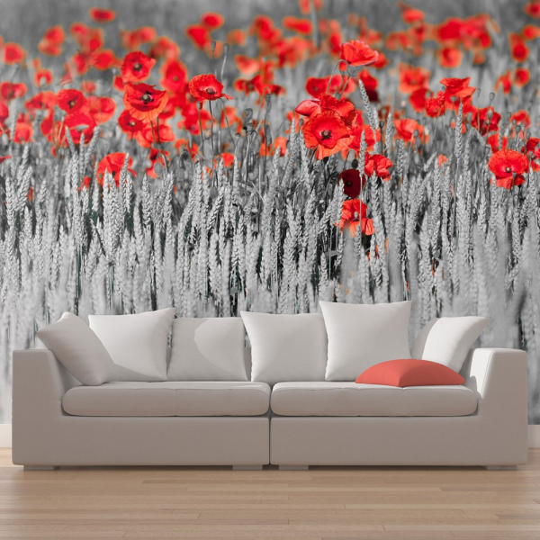 Fototapet - Red poppies on black and white background 0