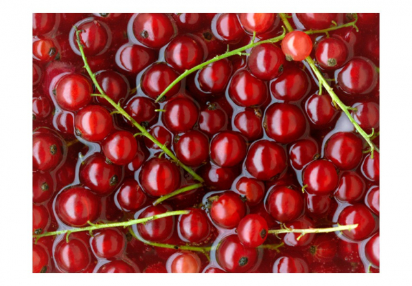 Fototapet - Redcurrants bathed in water 3