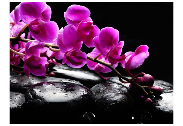 Fototapet - Relaxing moment: orchid flower and stones 3