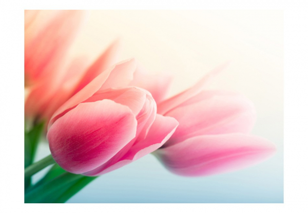 Fototapet - Spring and tulips 3