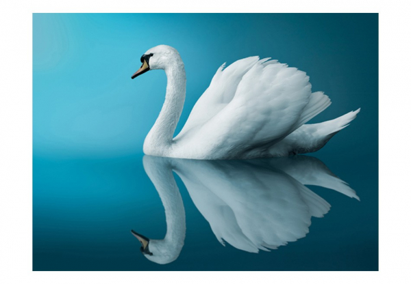 Fototapet - swan - reflection 3