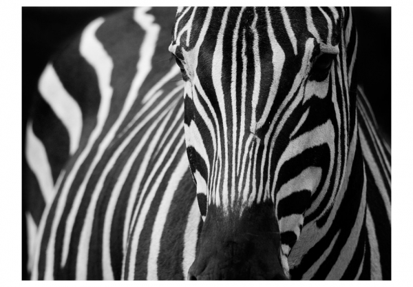 Fototapet - White with black stripes 3