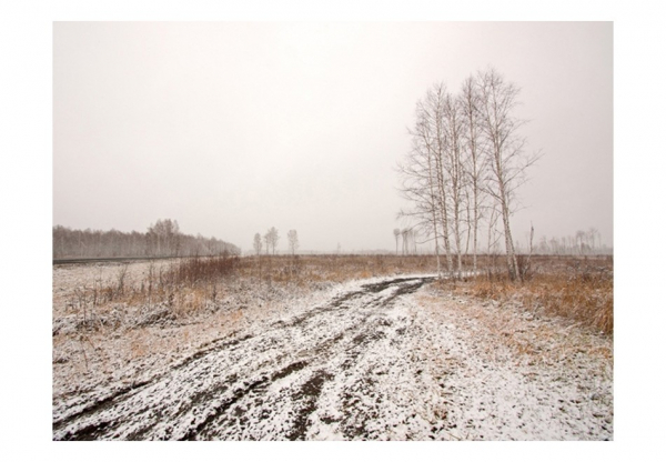 Fototapet - Winter field 3