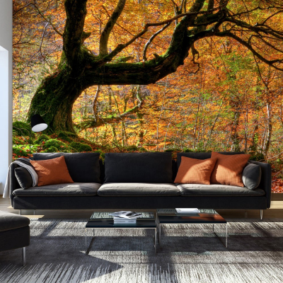 Fototapet - Autumn, forest and leaves0