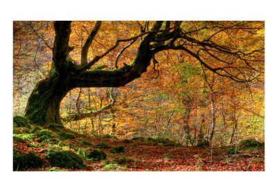 Fototapet - Autumn, forest and leaves3