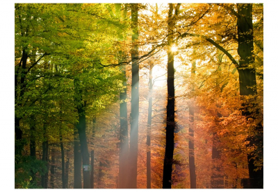 Fototapet - Beautiful autumn3