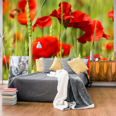 Fototapet - Cereal field with poppies0
