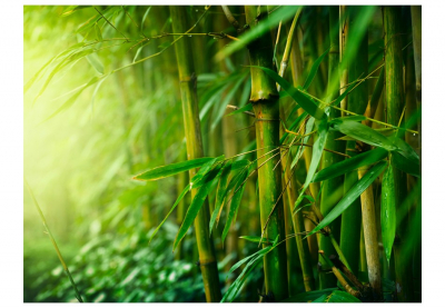Fototapet - jungle - bamboo3