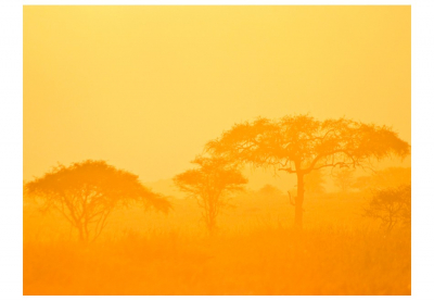 Fototapet - Orange savanna3