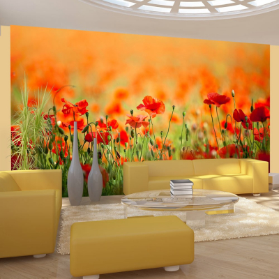 Fototapet - Poppies in shiny summer day0