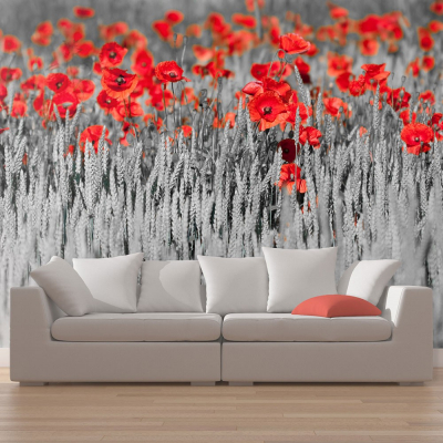 Fototapet - Red poppies on black and white background0