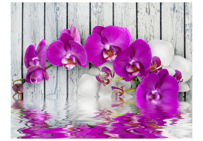 Fototapet - Violet orchids with water reflexion [3]